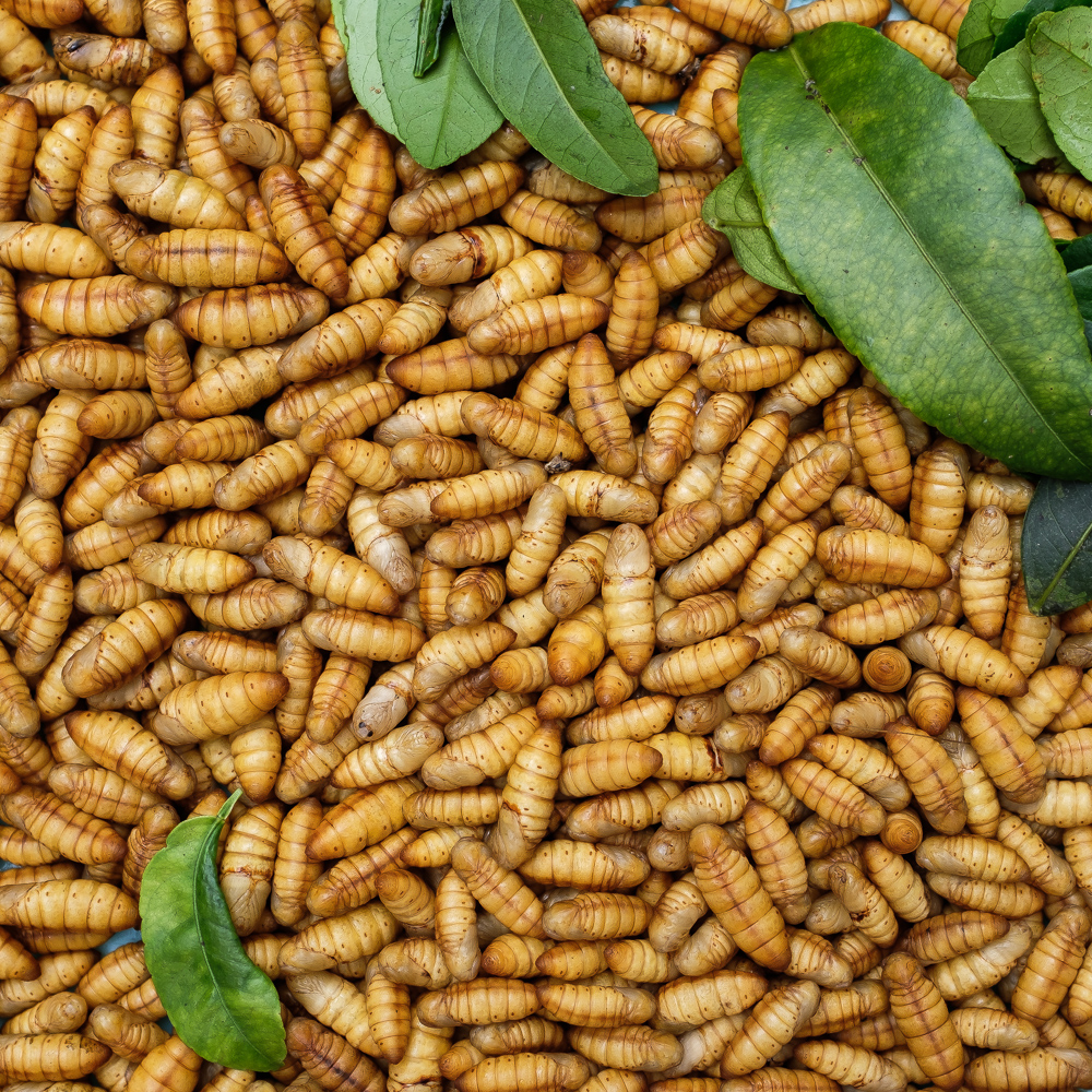 Edible larvae for sale in Hanoi street market