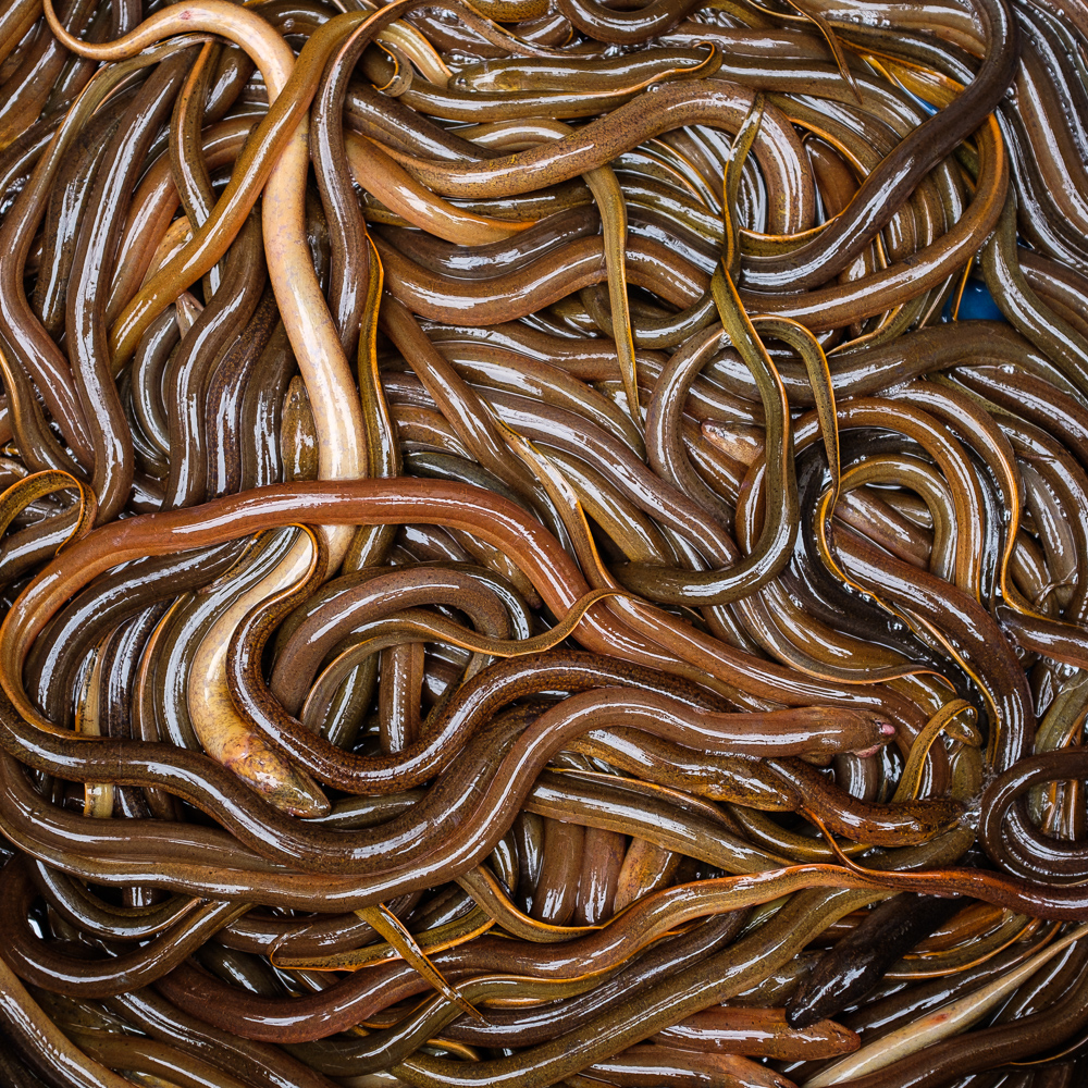 Eels for sale in Hanoi street market