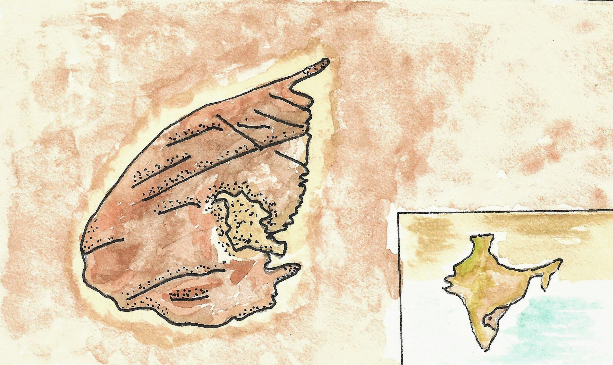 map  1 (1).jpeg