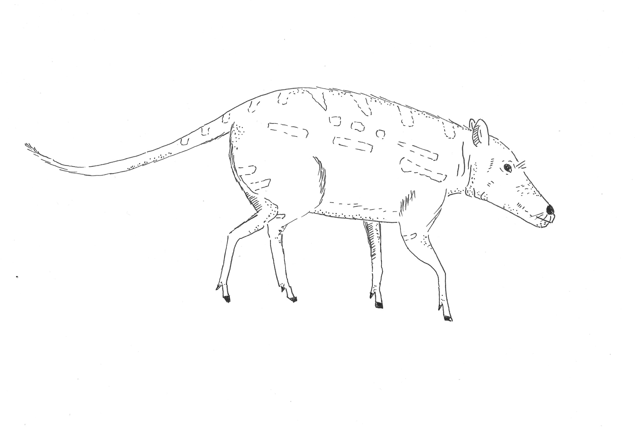 The deer-like, dog-nosed, hoofed terrestrial mammal Indohyus existed more than 50 million years ago in the early Eocene, an epoch of wet and balmy weather. What did it evolve into?