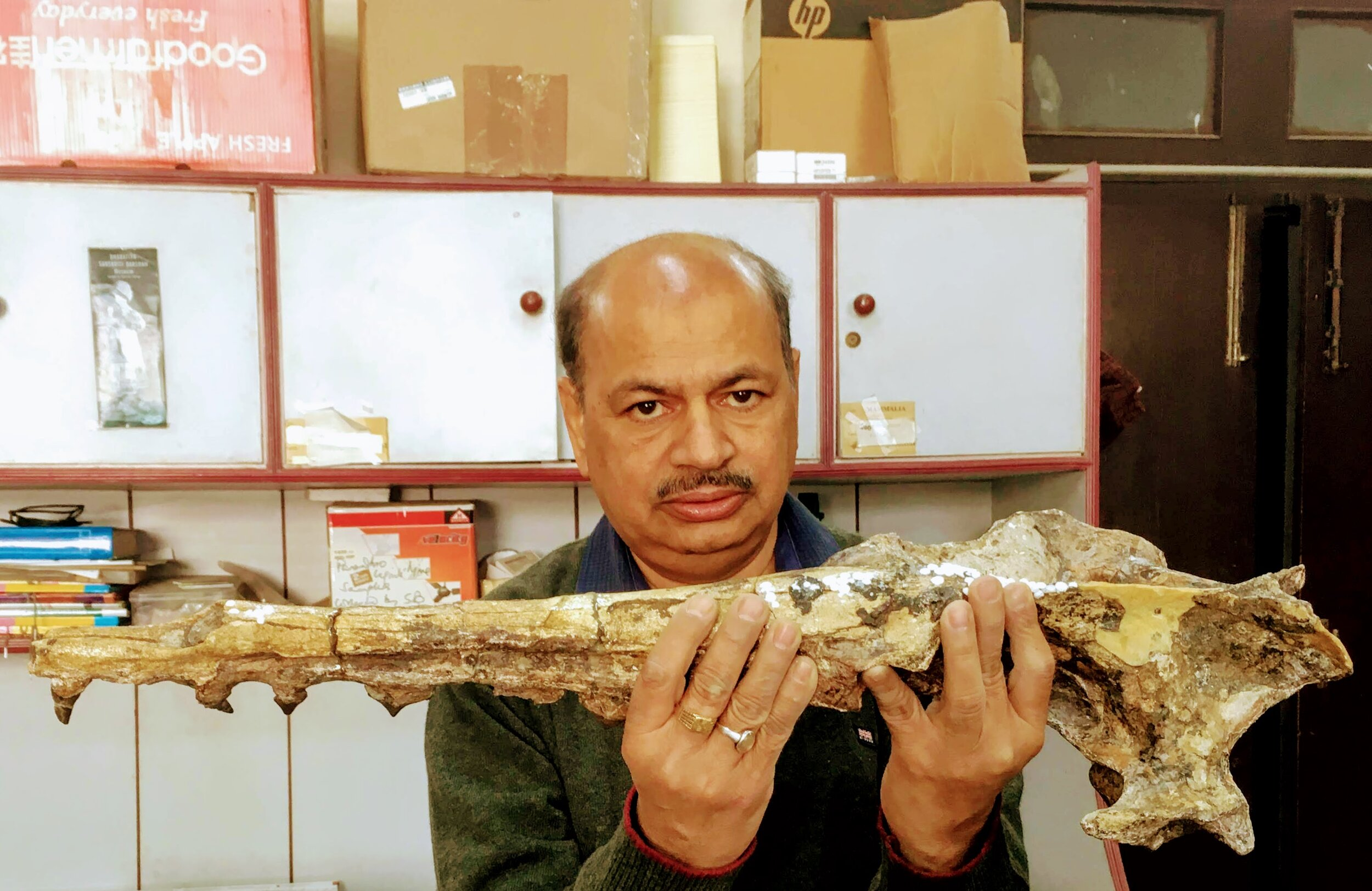 Palaeontologist Sunil Bajpai holding up a fossil of a remingtonocetus.