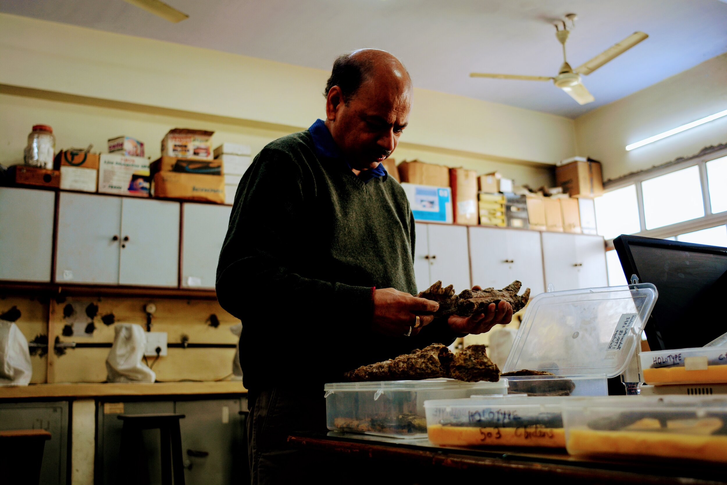 Sunil Bajpai in his lab at IIT Roorkee. Many of these fossils were found in the desert of Kutch.