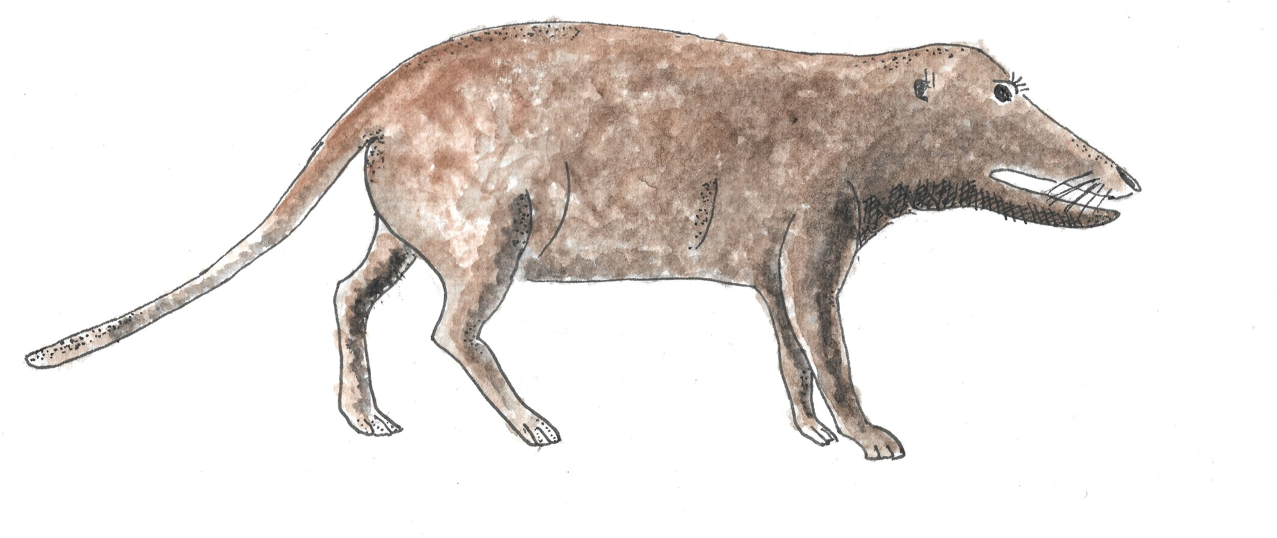Pakicetus was the wolf-like, fish-eating, amphibious whale ancestor.