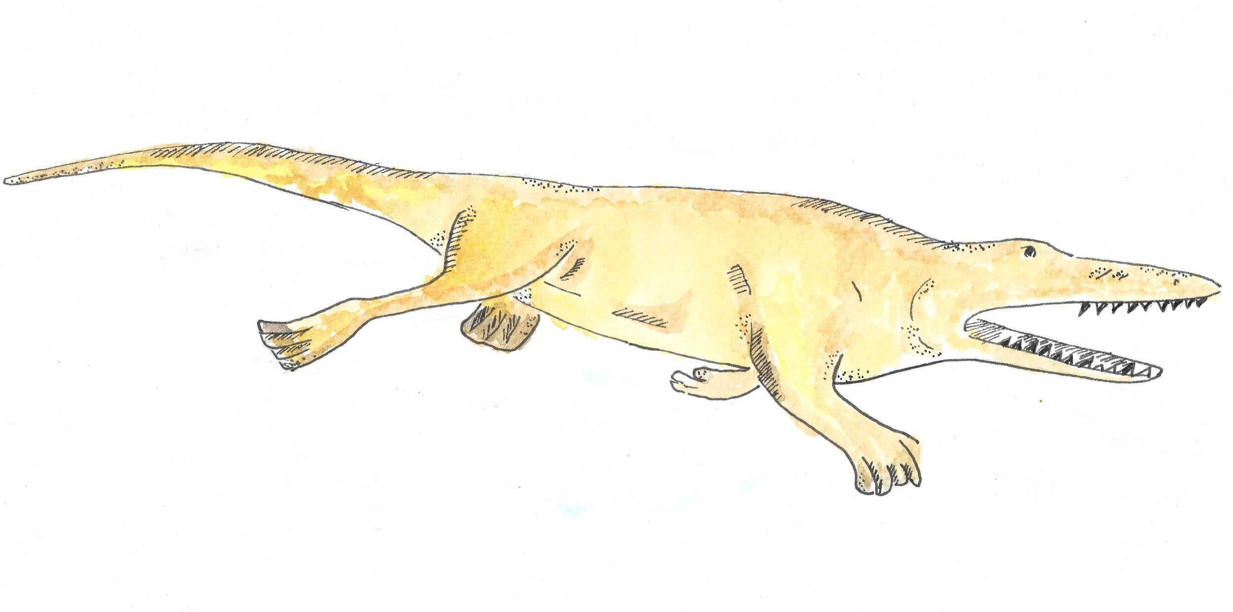 Remingtonocetus was an ancestral whale with a crocodile-like snout and short limbs.