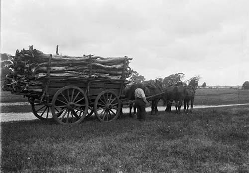 Harvesting c. 1910 – Courtesy of The State Library of Western Australia.