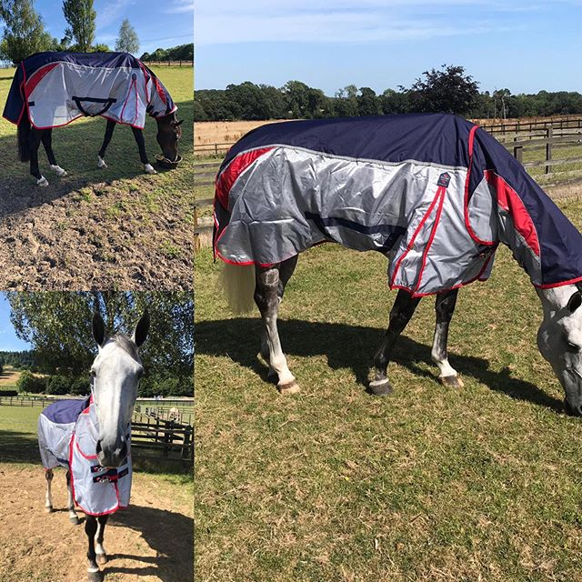 Snug as a bug in a rug! Actually there's no bugs thanks to @premierequineengland for supplying these Buster Stay Dry Super Lite so quickly, great rugs and great service 👏 Walshy Hilda and Hank are very happy . . . . . #horses #horsesofinsta #eventinghorse #flyrug #grazinghorse #horserug #tomjacksoneventing