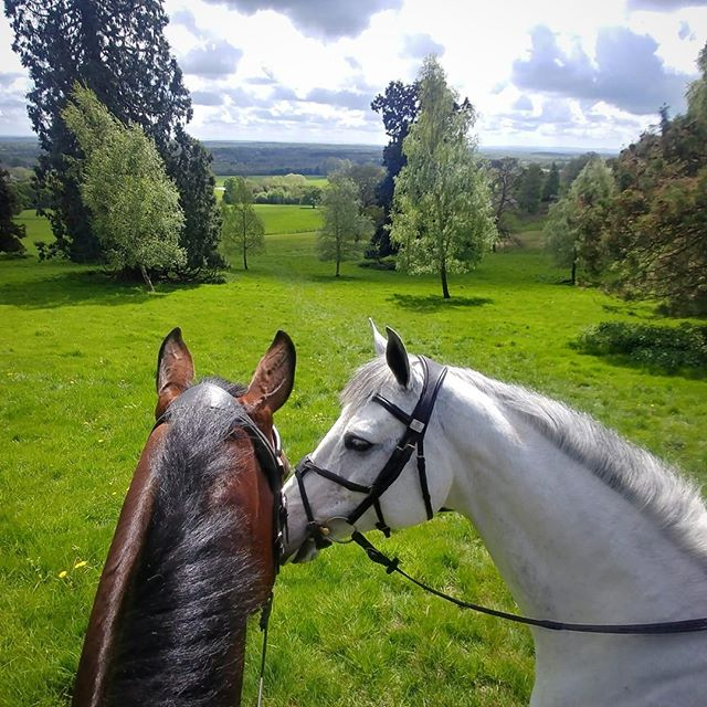 Happy International Friendship Day 🐴😍🐴 . . . . #internationalfriendshipday #besties #horselove #friendshipday #equine #surreyhills #equestrianlife #friendshipday2019 #tomjacksoneventing