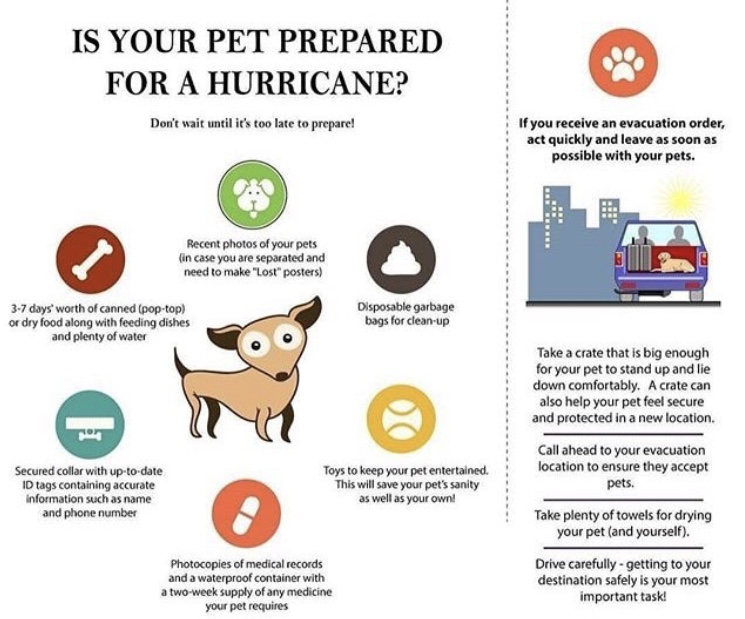 Thanks to  @CharlotteSPCA  for this helpful graphic!