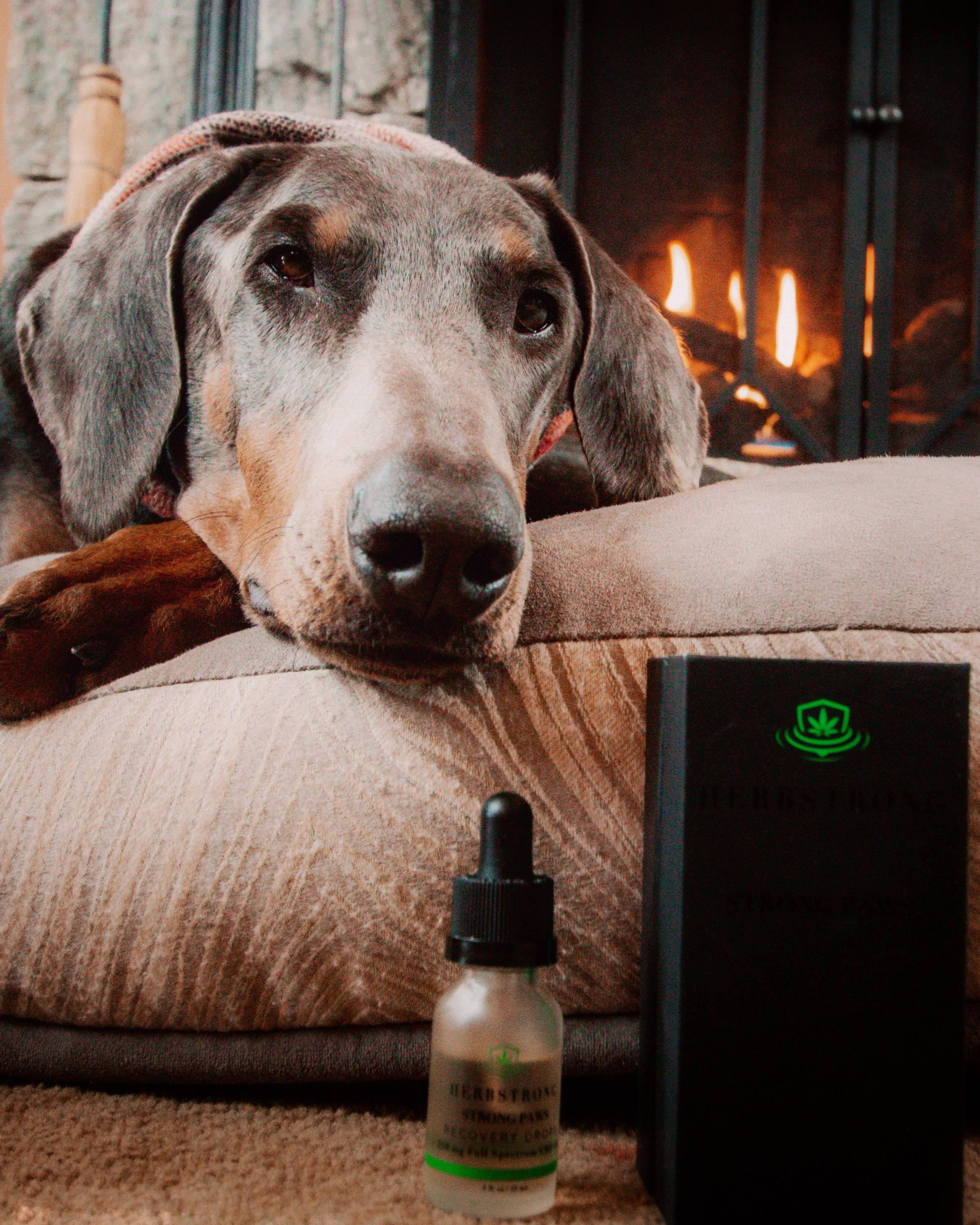 B relaxing after having a few drops of HerbStrong Paws full spectrum hemp oil.