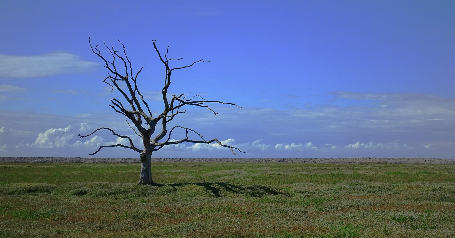 tree-2649411_1920.jpg