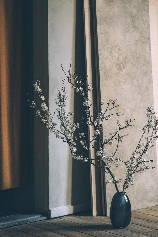 Blomstrende forårsgrene i februar Fotograf Marcus Nyberg