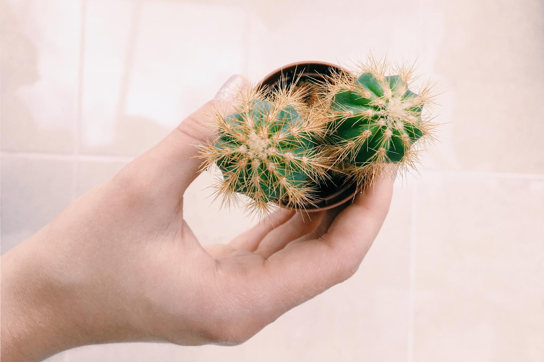 Cactus Original.jpg