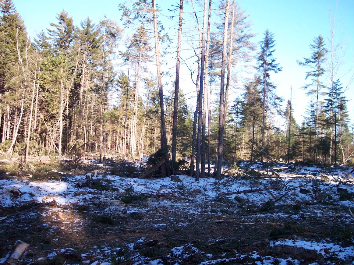 deer-yard-destroyed-.jpg