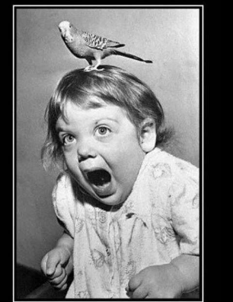 How I react when I encounter birds