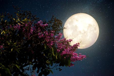 Full Cherry Moon.jpg