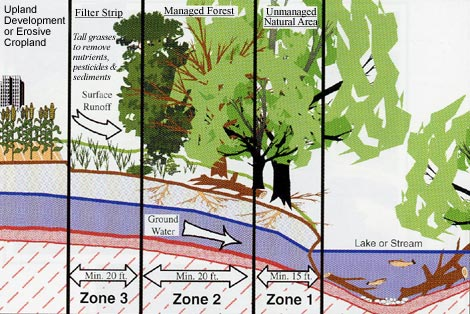 A diagram of a typical Riparian Forest Buffer. Photo from Southeast Michigan Resource Conservation & Development Council.