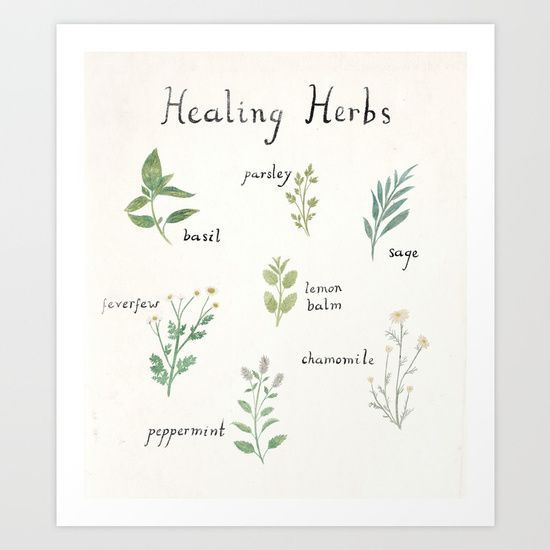 Shop the    Healing Herb art