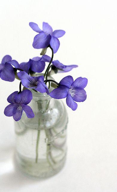 virgo violet .jpg