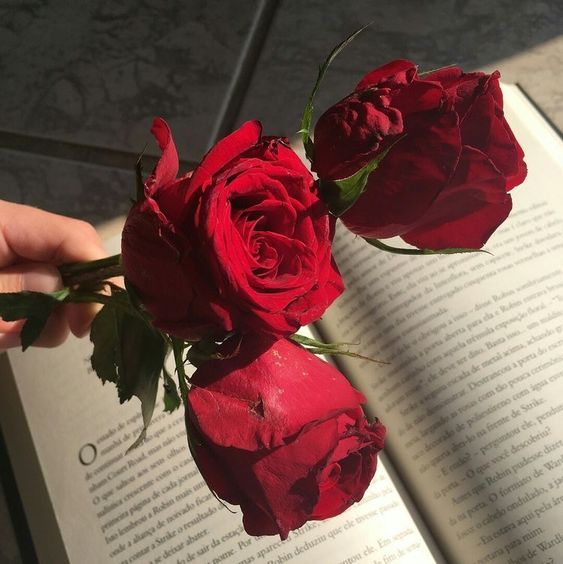Aries Red roses .jpg