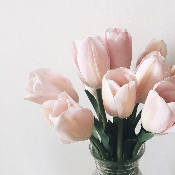 aries tulips.jpg