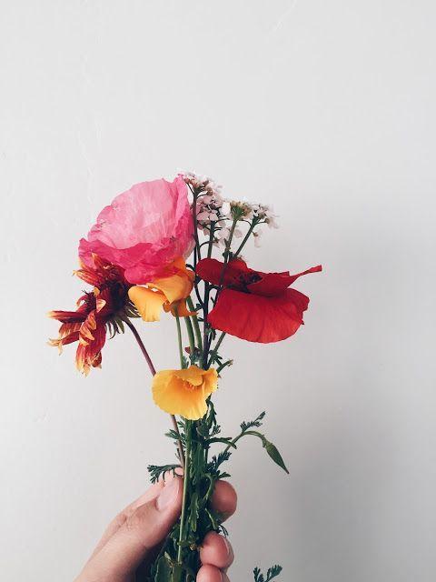 Tarus poppy.jpg