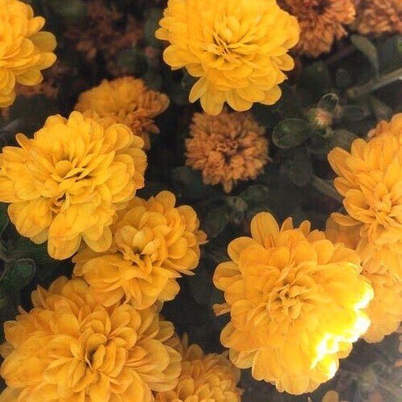 leo marigold .jpg
