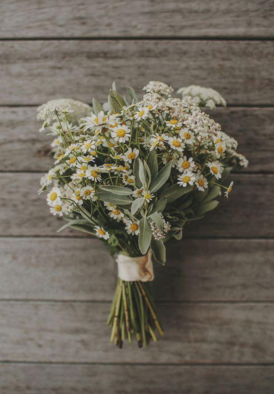 libra daisy .jpg