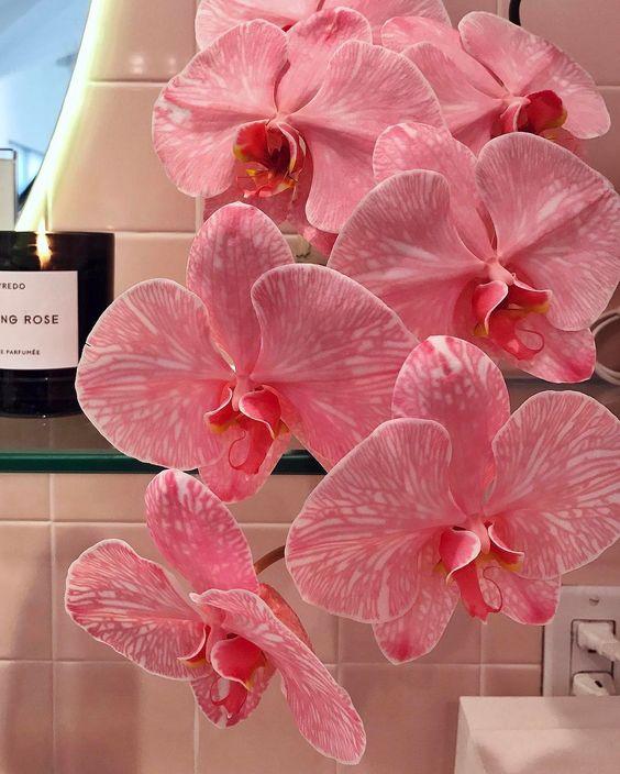libra orchid.jpg