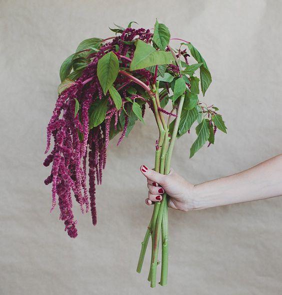 scorpio amaranth.jpg