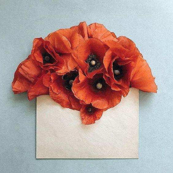 tarus poppy 2.jpg