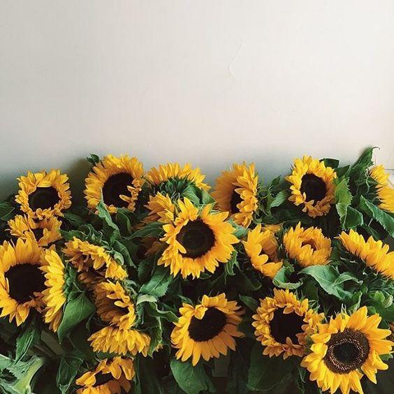 leo sunflower.jpg