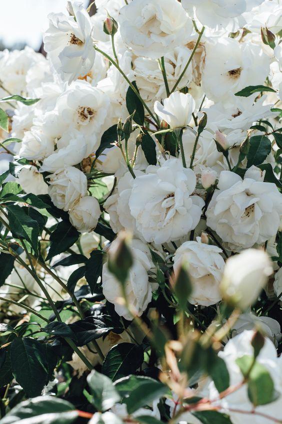 cancer white flower.jpg