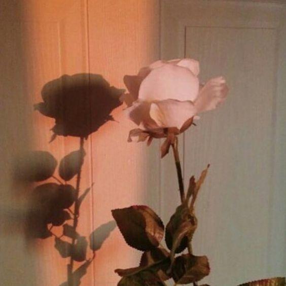 tarus rose.jpg