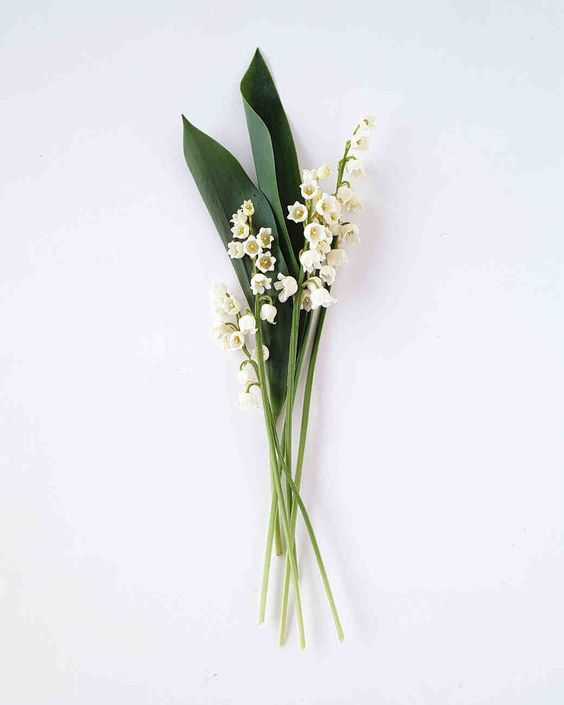 gemini lily of the valley .jpg