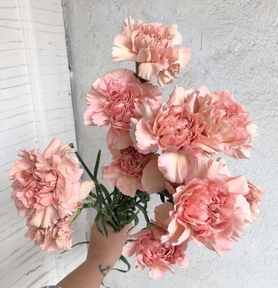 sagit carnation.jpg