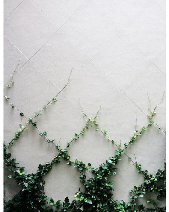 capricorn ivy .jpg