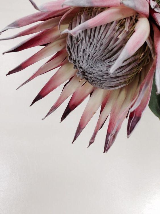 Variety Protea 3.jpg