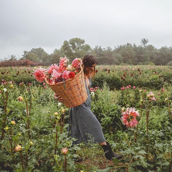 Dahlia Farm /  @ceciliaproskauer