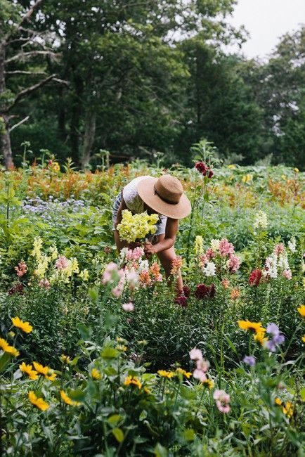 Flower Harvest by Elizabeth Cecil /  EdibleVineyard