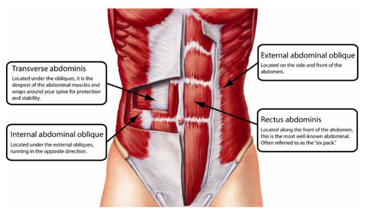The different layers of your front & side core.