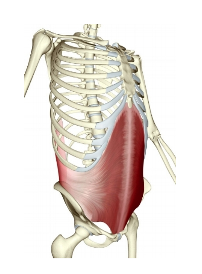 The deepest layer of the core, transverse abdominis