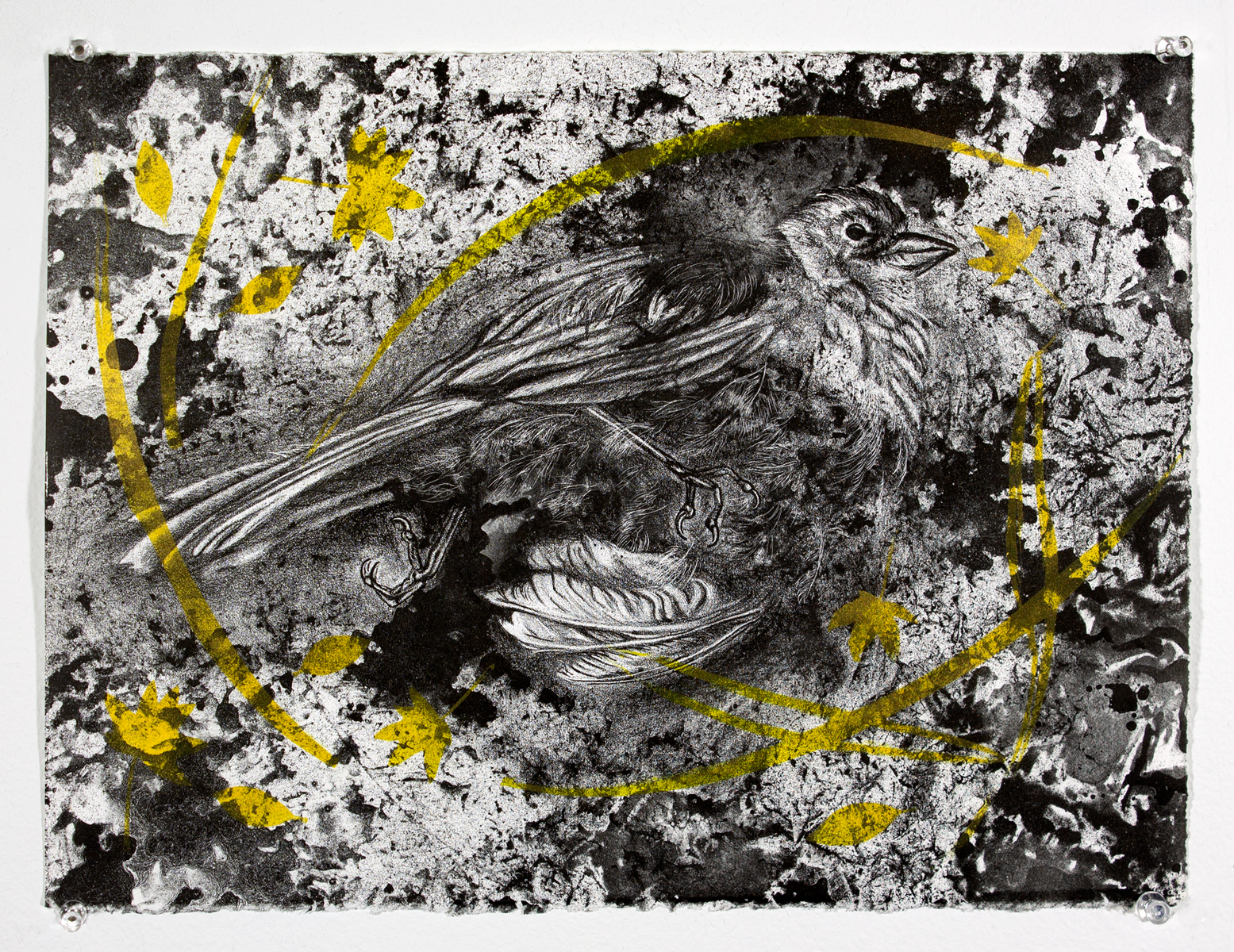 """Delicate Decay   2018  Crayonstone Lithograph  11""""x15"""""""