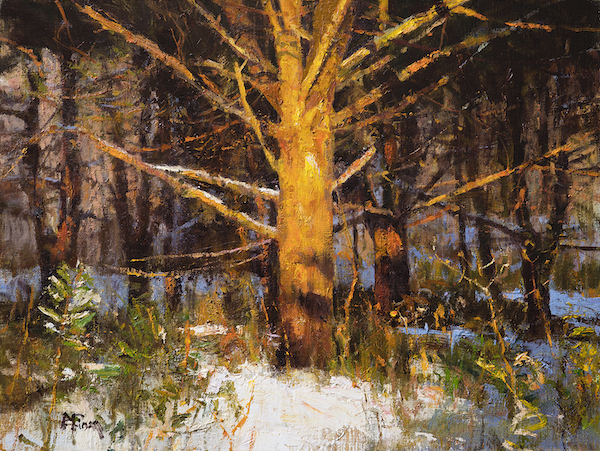 Empirical Light, Peter M. Fiore