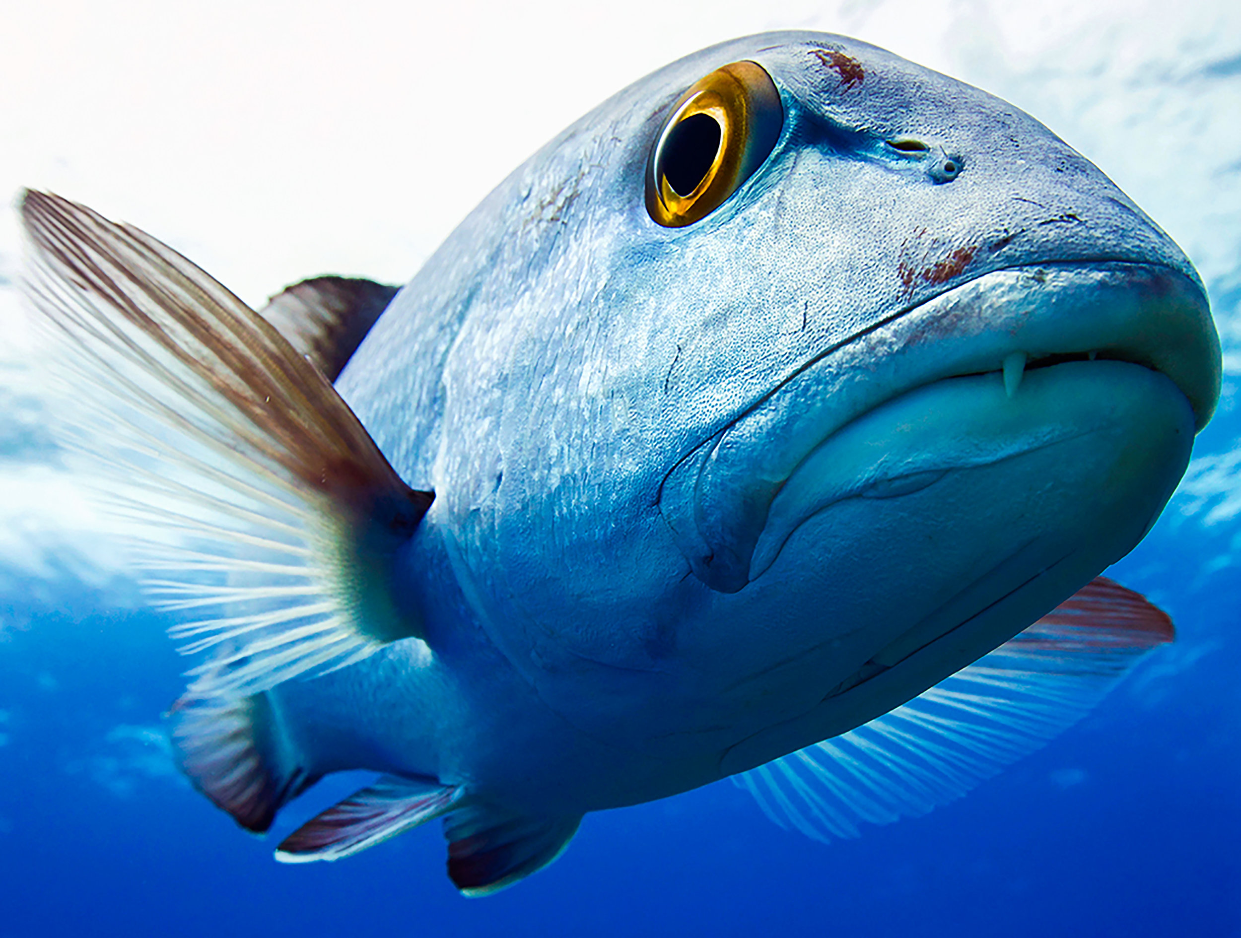 """I Sea You"" ~Makatea, French Polynesia ~ no.17"
