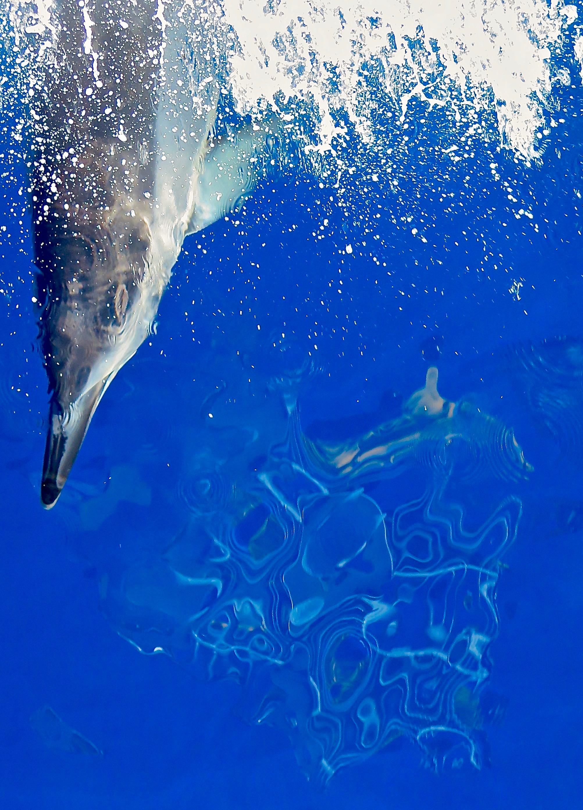 """""""Dolphin Transport"""" ~ Kauai, Hawaii ~ no.32"""