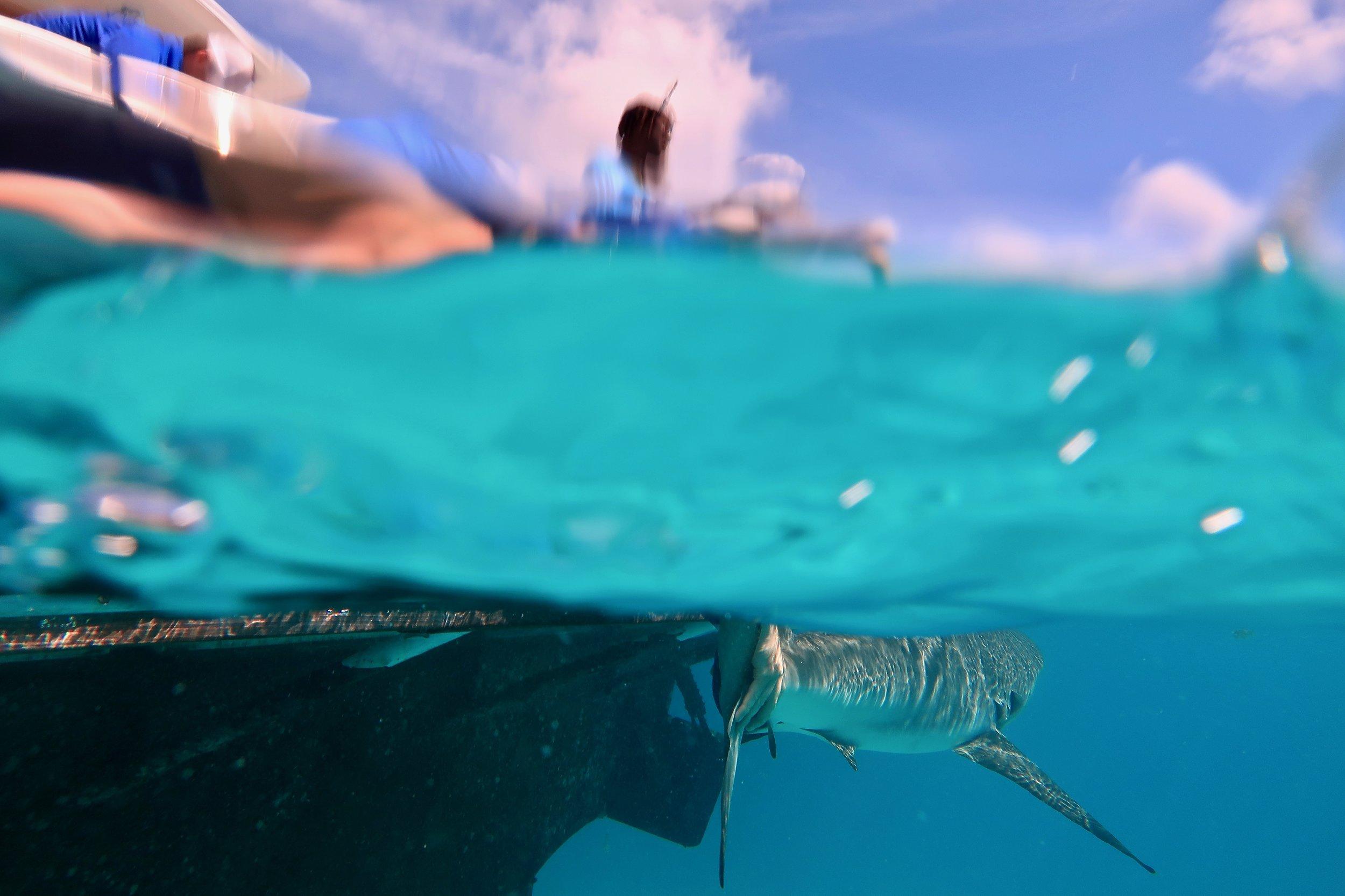 c. elton and shark.jpg