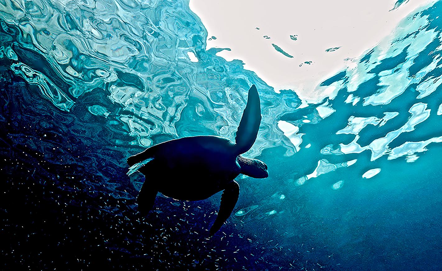 Galapagos.jpg