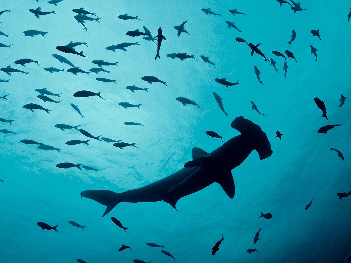 Galapagos_1.jpg