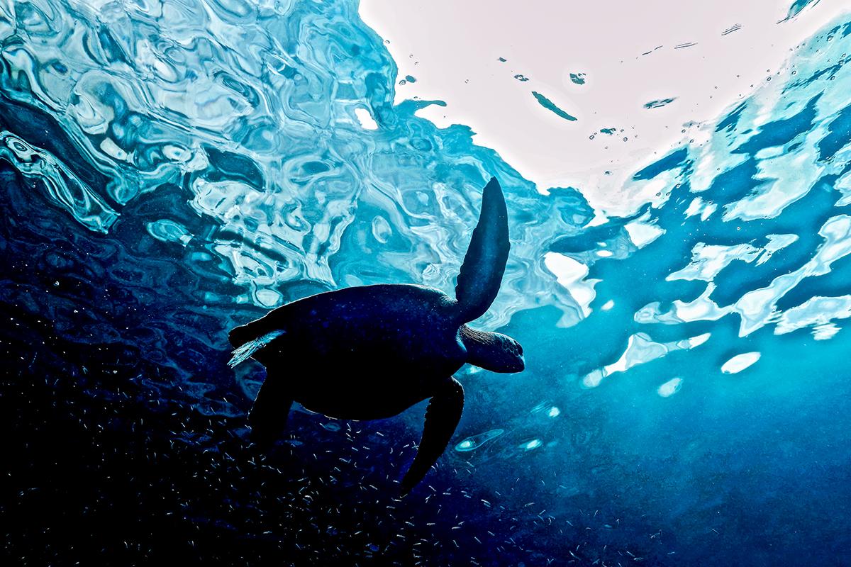 """""""Above the Shadows"""" ~  Galapagos, Ecuador"""