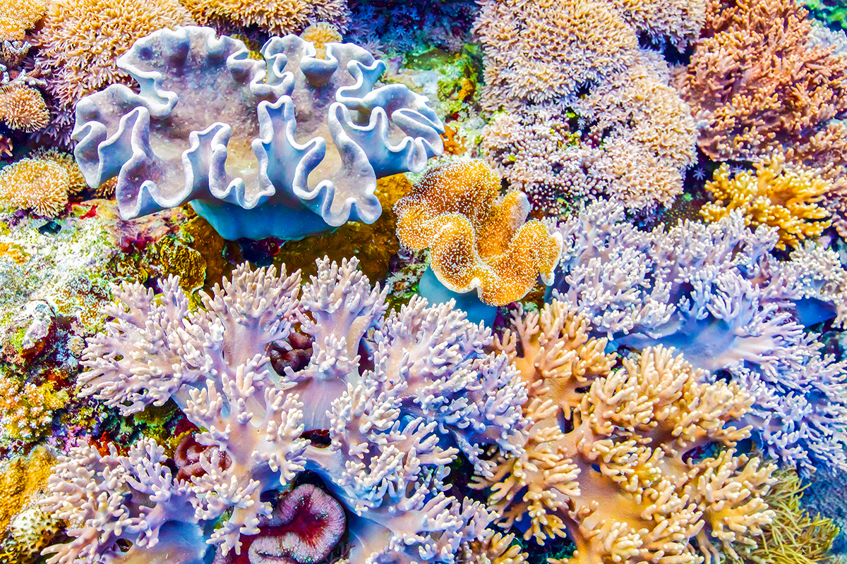 """Bouquet Beneath "" ~  Forgotten Islands, Indonesia"